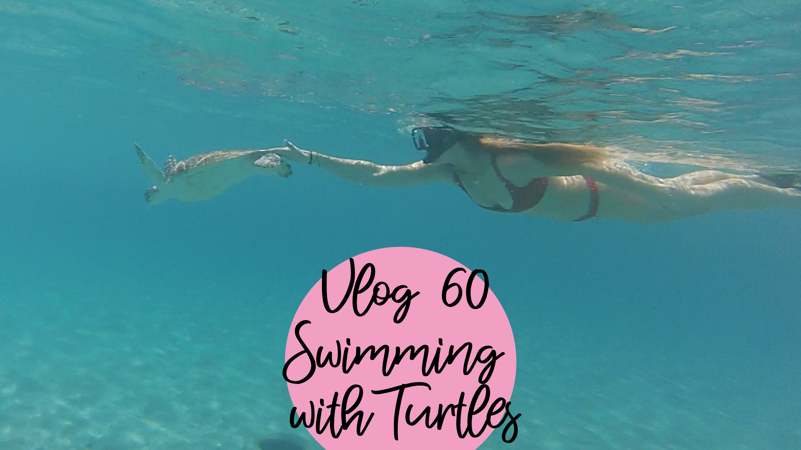 VLOG 60 | SWIMMING WITH TURTLES